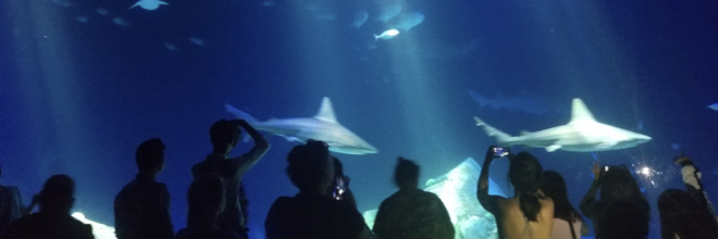 5 Reasons to see the Shark exhibit in Coney Island