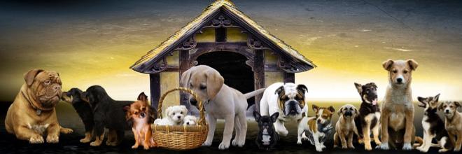 Pet Insurance- Yay or Nay?